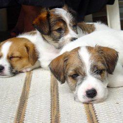three puppies snuggling