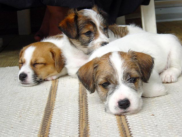 three puppies snuggling