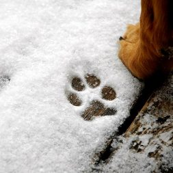 cold-weather paw care