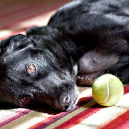 What Are the Symptoms of Strokes in Dogs?
