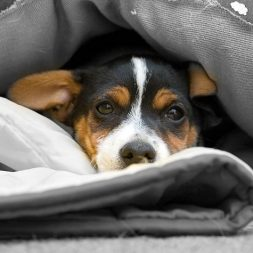 Keeping Pets Safe From Violence in the Home