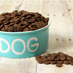 dry food for dogs in blue bowl