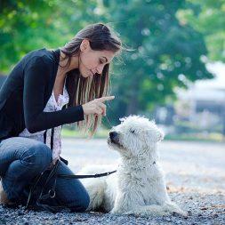 woman teaching a dog to sit