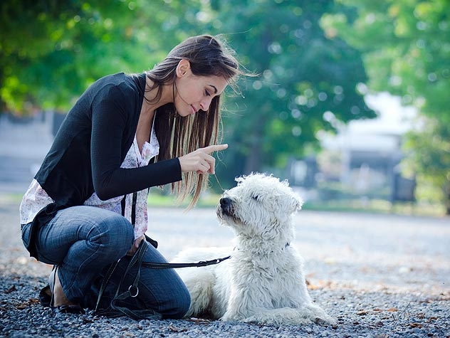 woman teaching a dog to sit