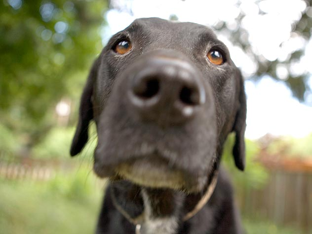 Does My Dog's Dry Nose Mean He's Sick?