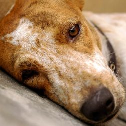 Animal Cruelty – Frequently Asked Questions