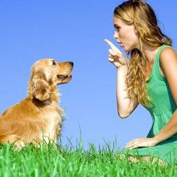 Careers in Dog Behavior