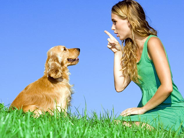 Careers in Dog Behavior