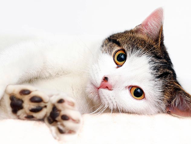 Take a Great Adoptable Cat Photo