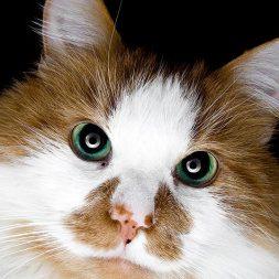 Ten Reasons Senior Cats Rule