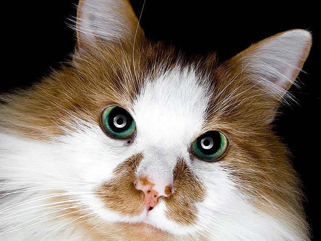 Ten Reasons Senior Cats Rule
