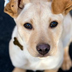 Why Neuter Your Dog?