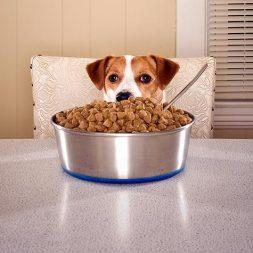 Dog and giant food bowl