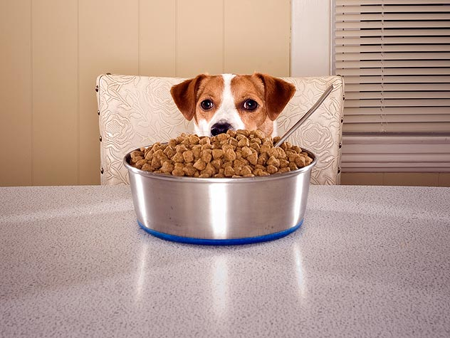 Dog and giant food bowl