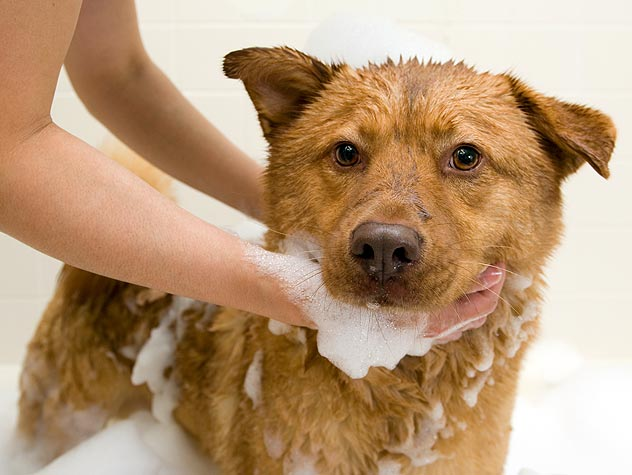 dog getting a bath