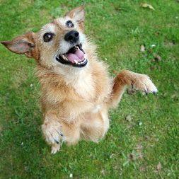 20 Uses for Dog Tricks
