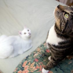 two cats exploring