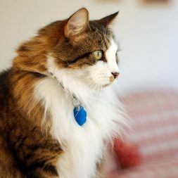 6 Tips for Controlling Litter Box Odor