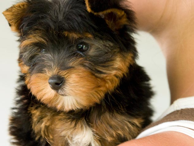 Puppy Vaccination Checklist
