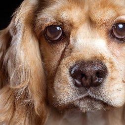 Do Medications Treat Dementia in Pets?