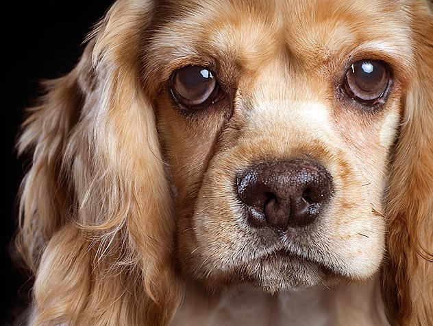 Do Medications Treat Dementia in Pets?