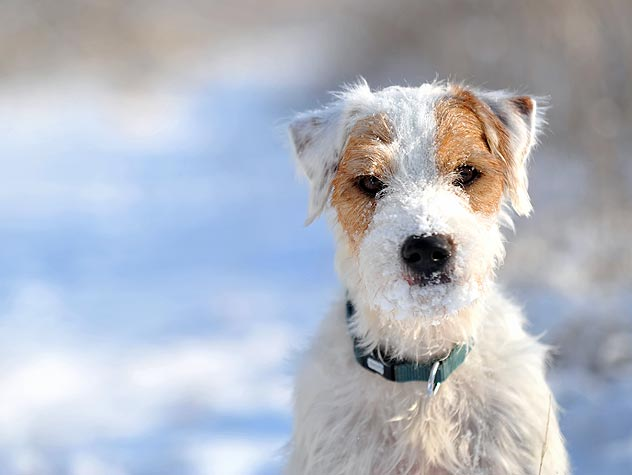 How to Help Pets with Arthritis Stay Comfortable In the Cold Months