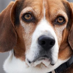 Staph Infections and Other Skin Problems in Dogs