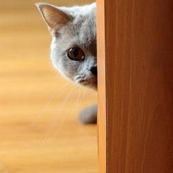 cat creeping around corner
