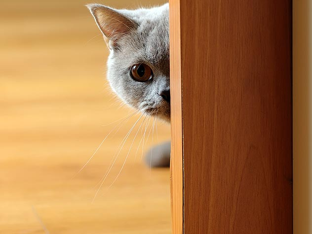 cat creeping around corner