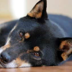 How to Protect Your Dog from Intestinal Parasites