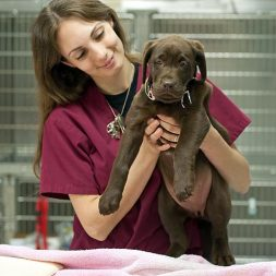 Resources in Animal Related Careers