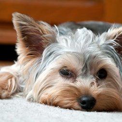 ASPCA's Animal Poison Control Center