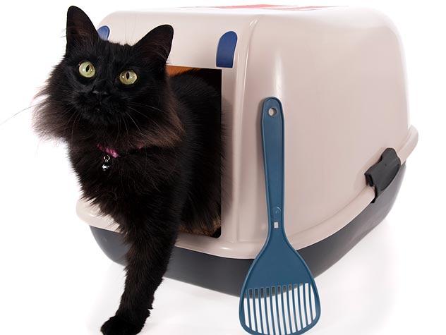 cat in a litter box