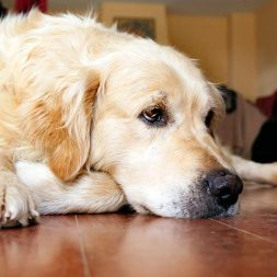 How Do I Know if My Dog Has Allergies?