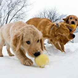 three young puppies playing in the snow