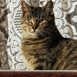 Preventing Feline High-Rise Syndrome