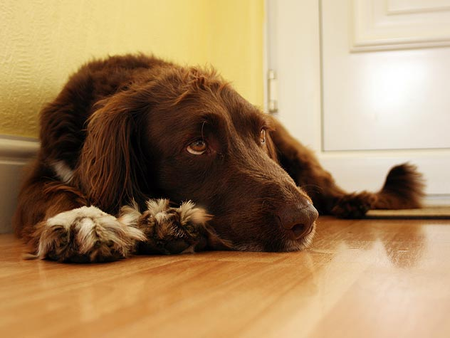 Causes of Bloat in Dogs