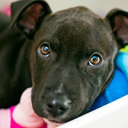 Heartworm and Your Puppy