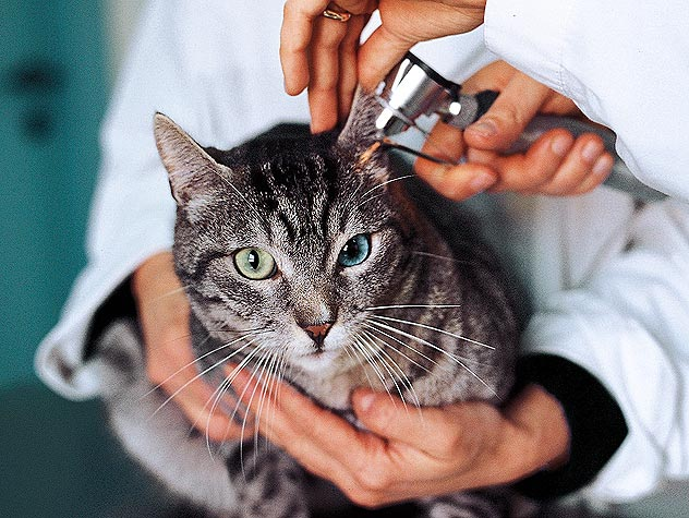Get the Most Out of Your Cat's Vet Visit