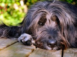 Taking a Bite Out of Canine Arthritis