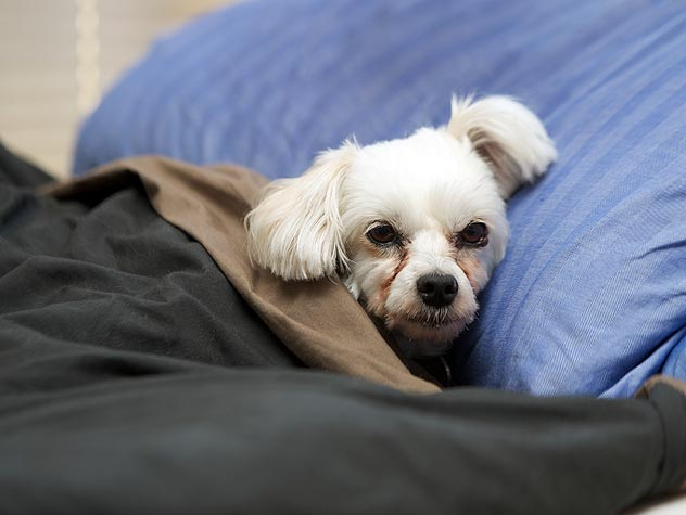What to Do if Your Pet Ingests Batteries