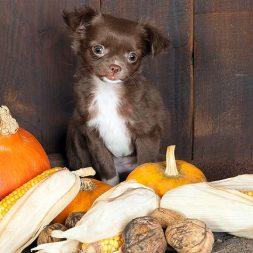 Halloween Pet Tips