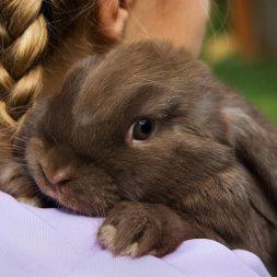 girl holding small brown bunny