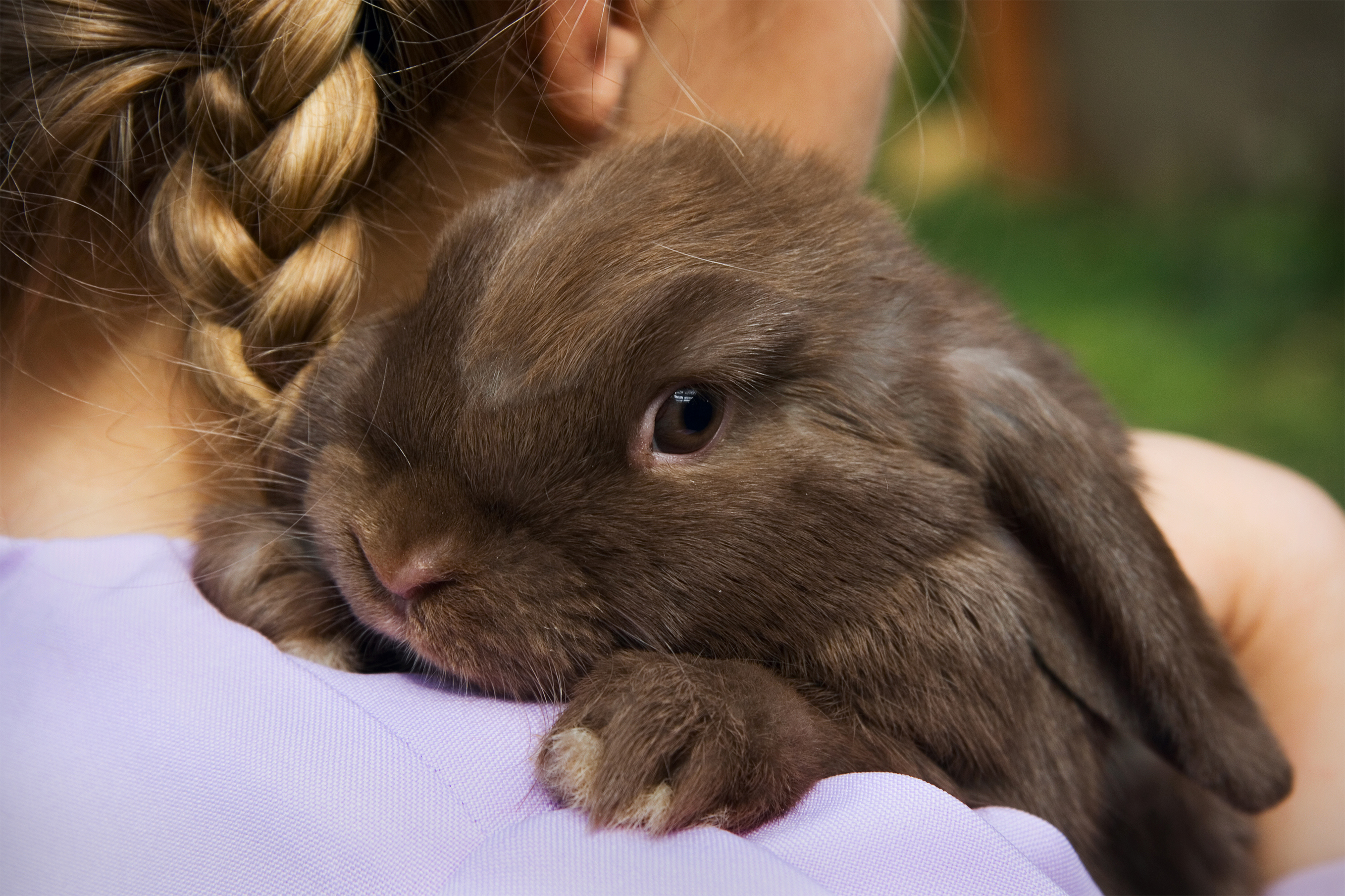girl holding small brown bunny