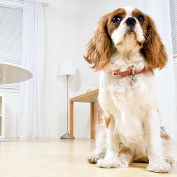 small dog sitting