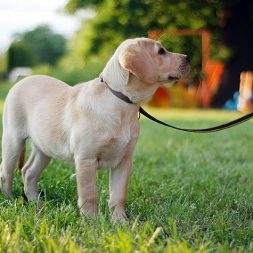 15 Uses for Walking Without Pulling (a.k.a. Loose Leash Walking)