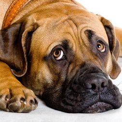 What's That Smell? Tips for Tackling Dog Smells