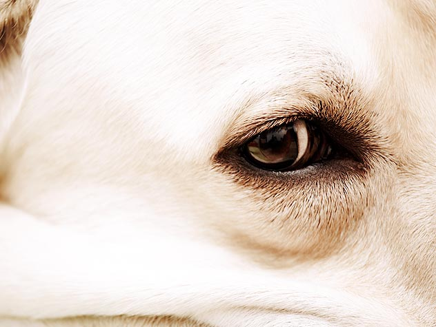 close up of dog eye