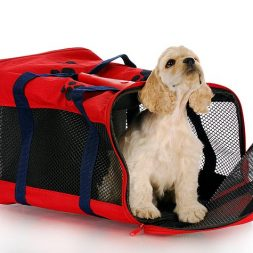 dog in a dog travel carrier