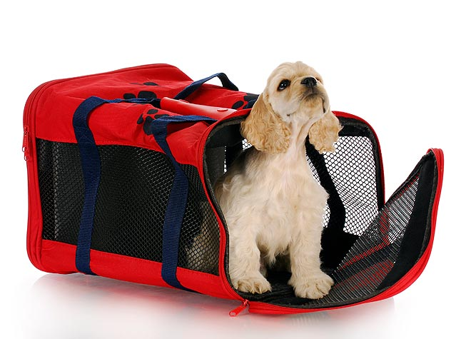 Holiday Travels with Your Pet